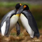 penguins hugging image
